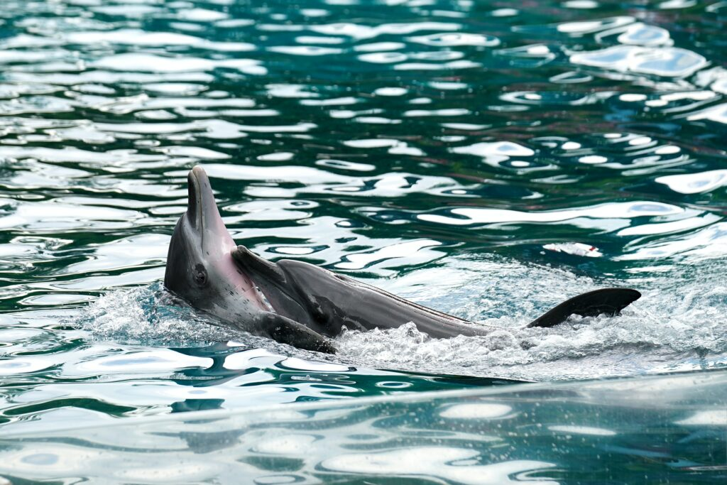 sex-dolphin